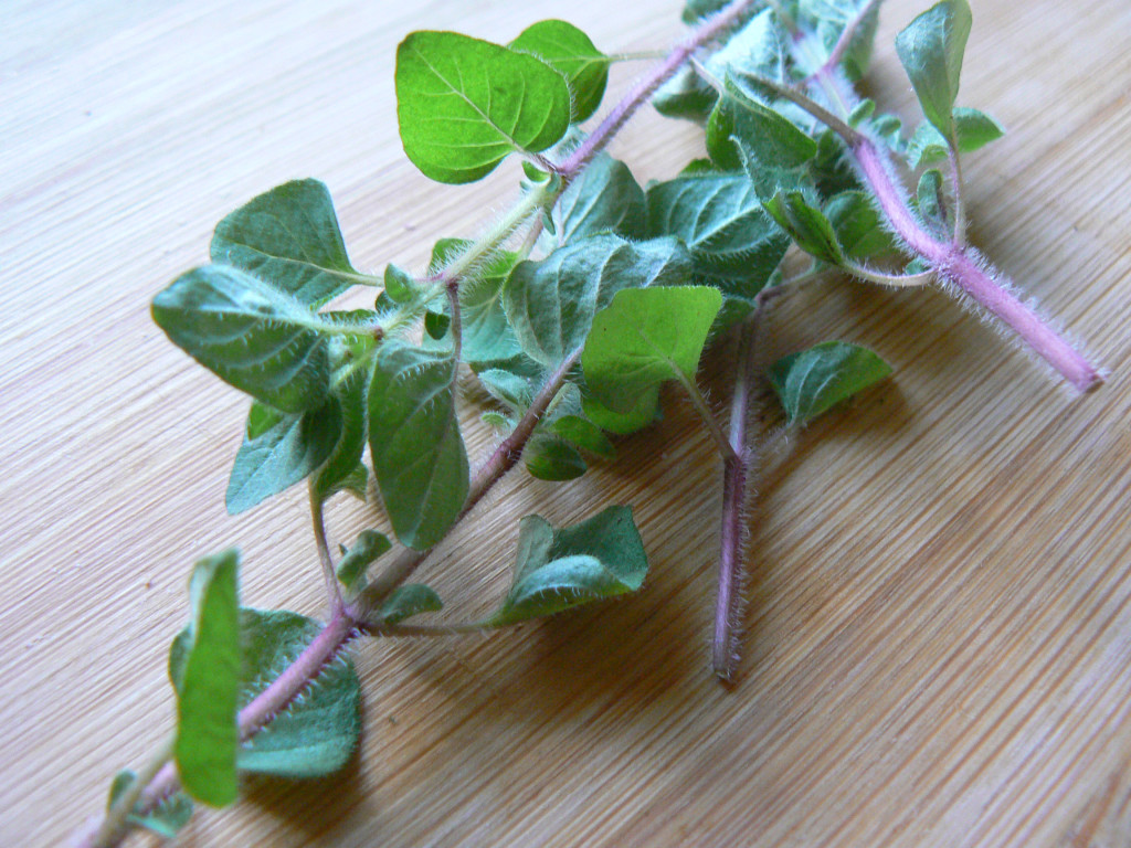 fresh-oregano